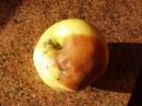 Цвета осени... Яблачка...