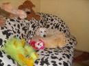 Моя собачка)))