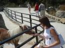 эта пони любит конфетки!
