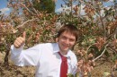 С фисташковым деревом