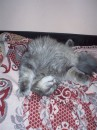 Мой Котёнок  спит :)))