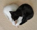 Черно-белое сердце