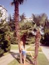 Лето 2004 Партенит (Крым) И не тяжолая, а наклонить пальму смогла... :)