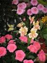 меня балуют цветами... )))