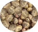 """Каждый желающий может быть фокусником, иллюзионистом, магом или чародеем, наконец. На счёт """"раз"""" закапываем в землю 1 мешок картофеля, а на счёт """"два"""" - выкапываем 20 мешков картофеля, который и размером побольше!!! Ну, как мой фокус?"""