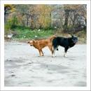 Про собачье: радости, горести...http://www.photographic.com.ua/gallery/photo.aspx?id=92132