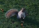 Шо? Орешки? Какие орешки? А нету-ти!