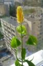 цвИточек