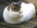 Пухлый кот такой..:))