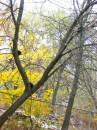 дерево с чёрными котами :D