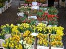 Цветочный базар в Карлсруэ