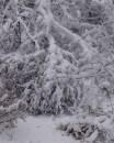 12 ноября 2007 года. Киев. 0°C.