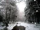 красиво.....снежок,лес.....