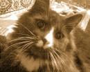 мой любимый котеночек-Тема
