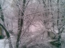 Вид из моего окна 16.01.2007