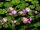 ...ети цветы для тебя!!!!
