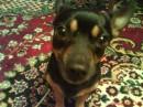 Мой верный пёс.
