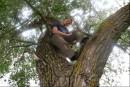 Любимое дерево...))