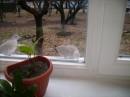 вот кто теперь живет на моём окне)