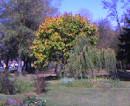 Пока, золотая осень...