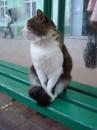 кот возле универа