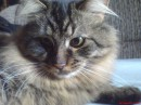 Тигр (мини) :)