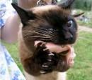 Кот с голодухи)))