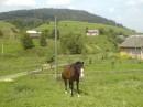 Тута моя дачка и рядом тачка тип конячка гг