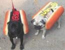 В нашем меню сегодня Hot-dog с горчицей и кетчупом.Вам какой?С кетчупом уже не осталось....))))))))