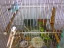 Попугайчкики >.<