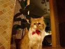 Мой любимый-прилюбимый котик =) Вот такой вот он красавчик на Новый Год ходил
