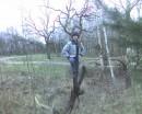 а за деревом дерево