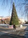 Елка в моем парке))