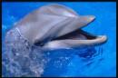 общение с дельфином лечит душу)