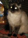 Мой ласковый и нежный зверь)))