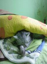 мой сладкий Мачо))