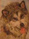 Аляскинский маламут. Пастель