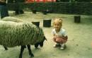 Три овечки........=)