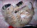 моя девочка спит