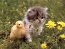 миленькие создания!!!!!!!!!!!!!