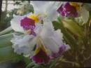 цвето4ик...