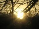 ...запуталось солнце в ветвях...