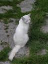 """я його люблю! Люблю його! Розумашка ! іноді здається, що кіт дивиться на мене екстравагантними очиськами і мовить"""" які ви всі люди приземлені"""".. короче кіт удався добрий!!! Кротів уже 28 зловив!!!!!!!! мишей кучу, приютив одного київського вицьвірка)"""