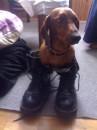 а это пёсик Максик- собака моёй лутшей подруги!  =)