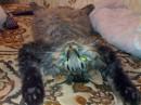 мой котяра