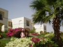 Egypt/Sharm 2008