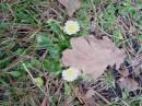 Сказка прошлой зимы 23.12.06