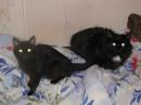 мои котики