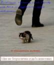 жалко котенка(((((((