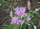Такое может рости прямо на газоне и даже без охраны.